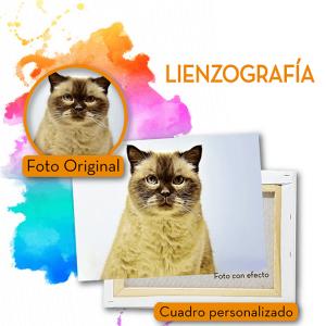Lienzos mascotas-04